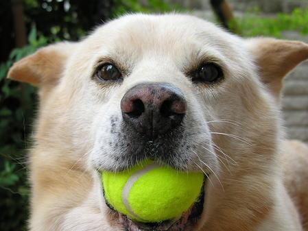 犬の画像 p1_31