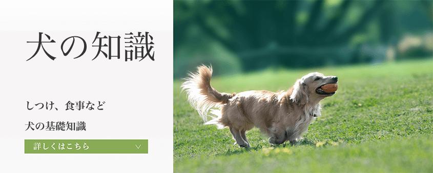 犬の知識【いぬのちしき】例 犬のしつけや食事など。犬の基礎知識を紹介しています